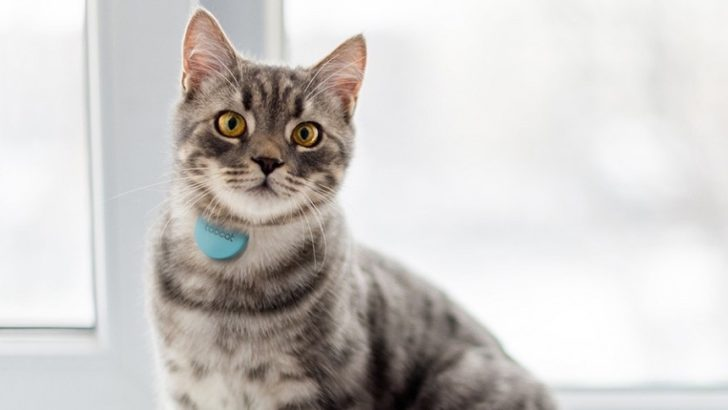 Track Your Pet Cats with Wearable GPS Tech.