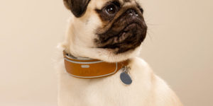 LINK AKC Smart Dog Collar Tracks Comfort, Activity And Location.
